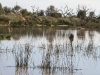 Mungerannie wetlands, formed by overflow from the station bore.