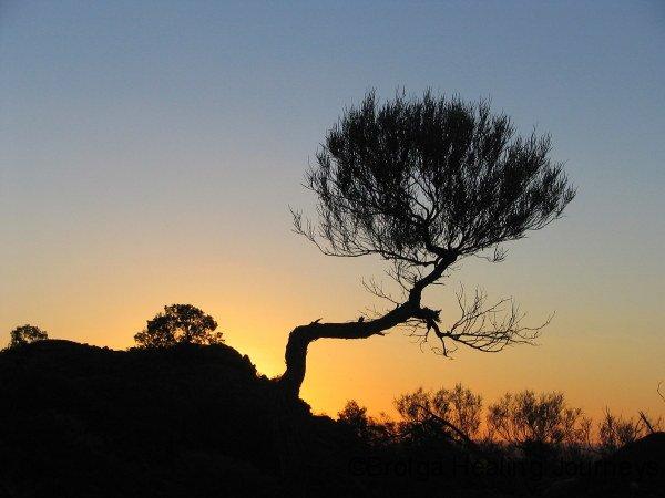 Sunset on Ridge Walk, Mutawintji Ntl Pk, NSW