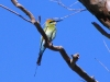 Rainbow Bee-Eater at Coolbro Creek waterhole