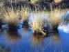 Watergrass, Coolbro Creek