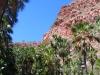 Livistonia Palms line El Questro Gorge
