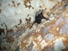A bat hangs to the wall inside the caves