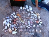 Some of the shells we collected on the beach