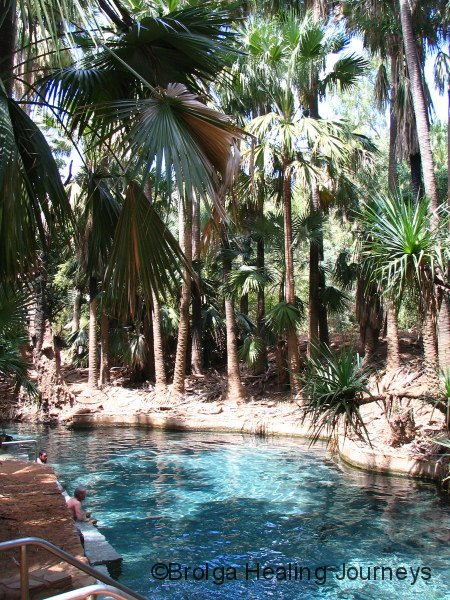 The pretty, though smelly, Mataranka Thermal Pool