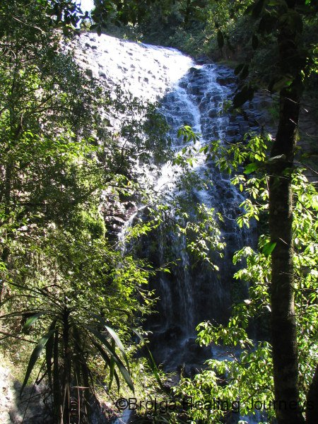 Another waterfall, Dorrigo Ntl Pk NSW