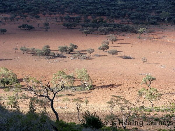 Late afternoon view from Mt Gundabooka across the mulga