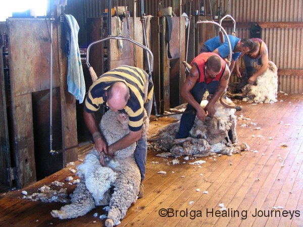 Shearing shed – Ballycastle Station