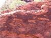 Petroglyphs on boulder