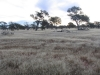 Field of native grass north of Murchison