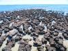Stromatolites at Hamelin Pool, Shark Bay region