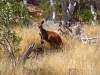 Local resident at Wittenoom Gorge