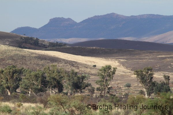 View of the nearby Flinders Ranges from Buckaringa