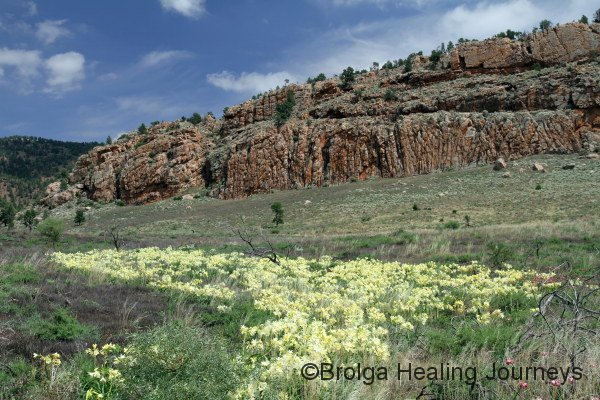 A river of Andamooka Lilies near Buckaringa Gorge