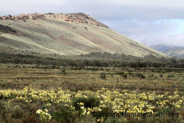 View across Andamooka Lilies to a Buckaringa hillside
