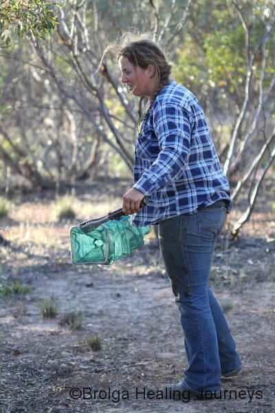 Felicity takes the funnel trap into the bush to release the Yellow-Faced Whipsnake (Demansia psammophis)