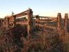 Old stockyard fence near homestead