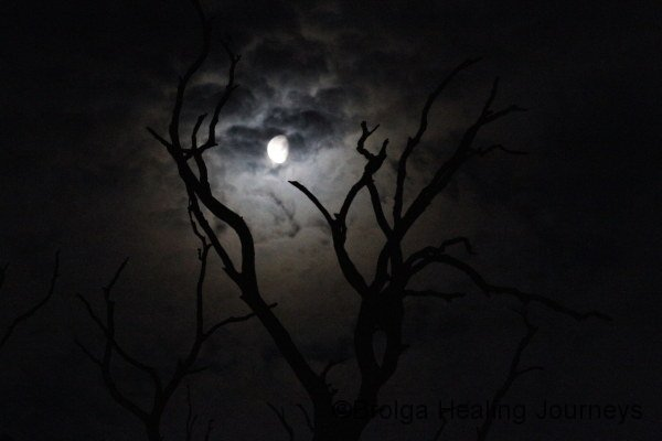 Eerie view of the moon from the old Red Gum forest