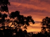 Another sunset view from the Red Gums