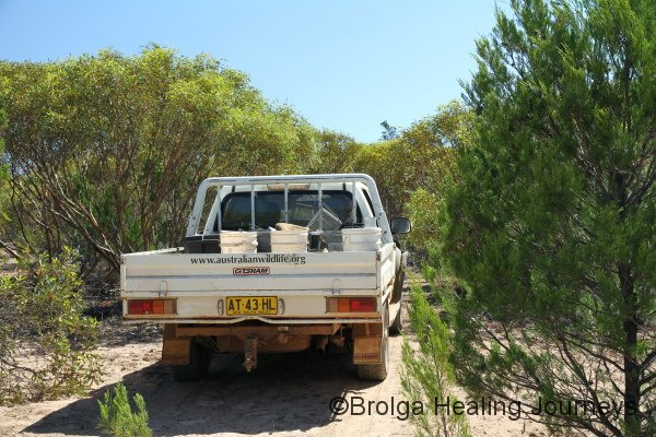Bush-bashing to one of the Mallee sites.