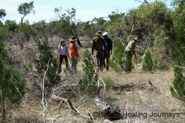 Forging a track through the scrub. From left, Nirbeeja, Anne, Rob, Keith, Felicity