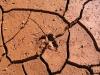 Emu footprint in dried mud - Red Banks Reserve, SA
