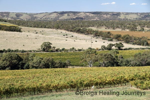 McLaren Vale vineyards seen from Kay Brothers