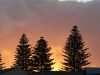 Norfolk Island Pines & sunset, Victor Harbour