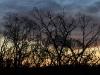 Last light, Flinders Chase National Park.  Dead trees a reminder of the 2007 bushfires