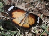 Butterfly at our Alice Springs campsite