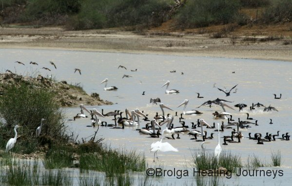 Bird-life galore at Rocky Crossing on Warburton Creek.