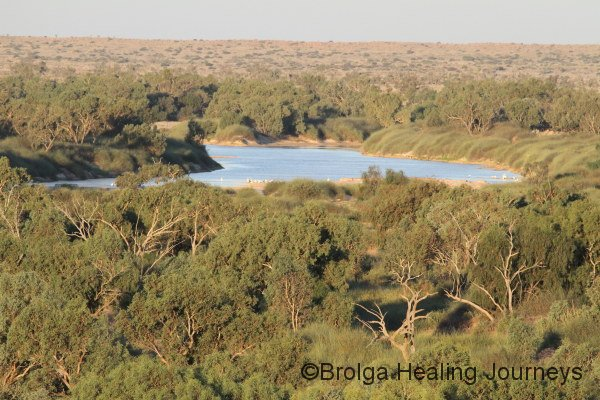 Late afternoon on Warburton Creek. View across the Coolibah trees.