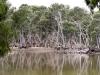 Duck Lagoon