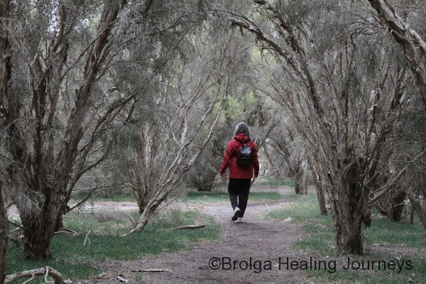 Nirbeeja explores in the Melaleuca near Murray Lagoon