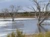 Afternoon sun on Murray Lagoon