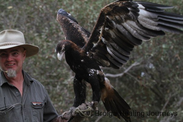 Wedge-Tailed Eagle spreads its wings at Raptor Domain