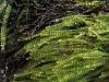 Seaweed, Snake Lagoon walk