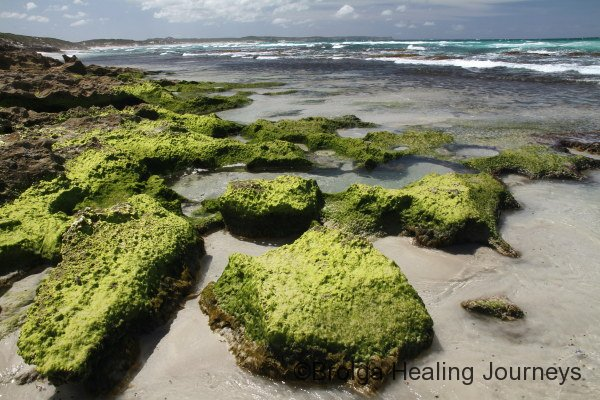 Algae covered rocks on Vivonne Bay shoreline
