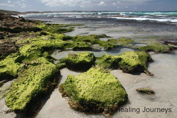 Algae covered rocks on Vivonne Bay shoreline