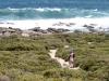 Nirbeeja admires the surf, Vivonne Bay Conservation Reserve