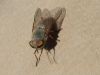 Even the flies are attractive at Vivonne Bay