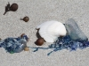 Blue Bottles &amp;amp; Shells, Vivonne Bay