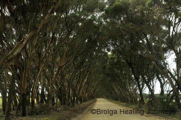 Many of Kangaroo Island's roads were through mallee arches like this, on the way to Cape Willoughby