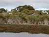 Vegetation surrounding Lashmar Lagoon, Chapman River