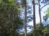 Virgin Karri forest, Warren National Park WA