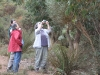 Hakea aenigma paparazzi in action!