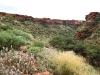 Lush views up King's Canyon