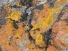 A study in lichen