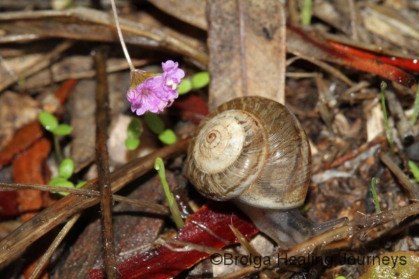 Snail, shell a little over 1cm wide, and tiny flower