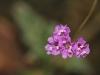 Tiny wildflowers