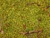 Moss moistened by rain